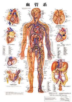 人体図2.png