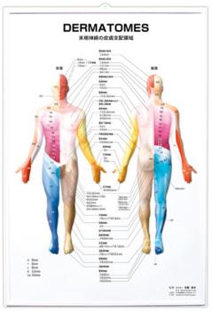 人体図.png